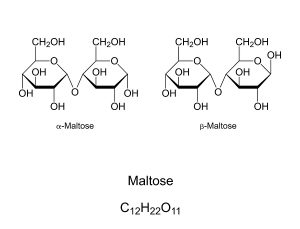 Maltose, malt sugar, chemical structure. Maltobiose, a disaccharide formed by 2 glucose units. Component of malt and substance obtained in the process of allowing grain to germinate in water. Vector.
