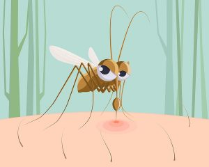 Mosquito sucking blood. Funny pest insect, mosquito bite red mark on skin cartoon vector illustration. Insect mosquito, blood bite, bloodsucker cartoon